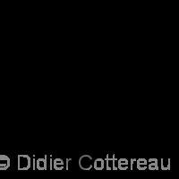 Didier COTTEREAU